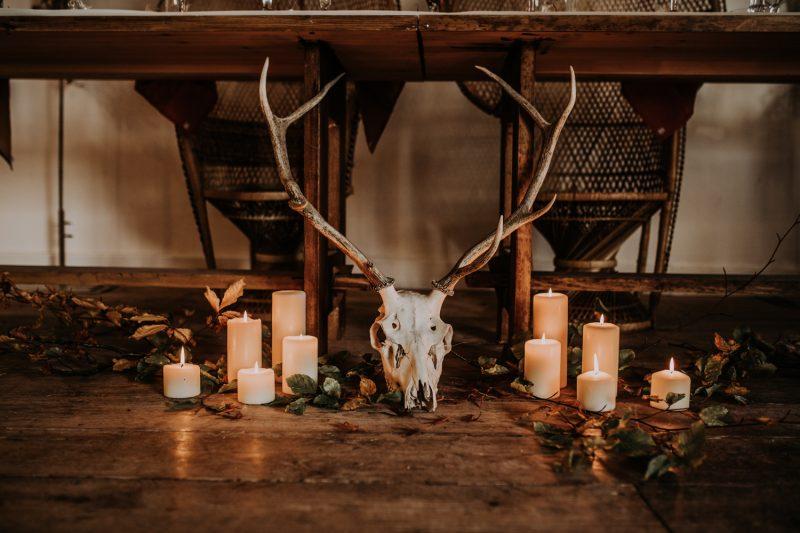 Red Deer Stag Skull